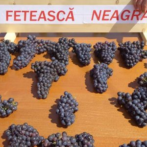 Vita de vie Feteasca Neagra