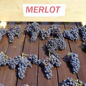 Vita de vie Merlot