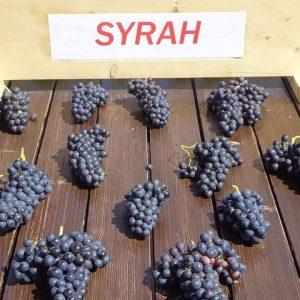 Vita de vie Syrah